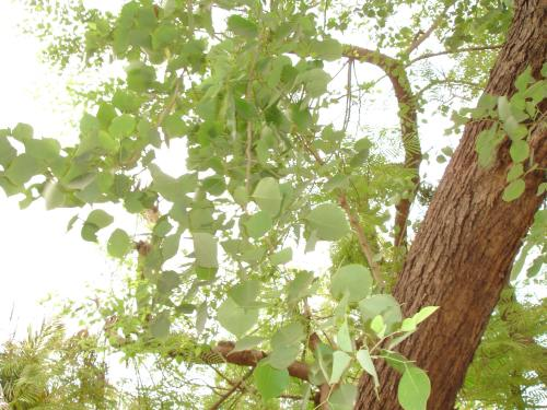 Cluster Of Thoughts Plant A Tree As Per Your Nakshatra